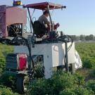 uc davis biological agricultural engineering graduate student vivian vuong phenotyping